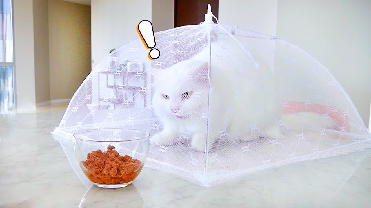 Cats Try To Escape Mosquito Net