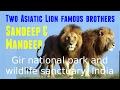 दो शेर भाई जोड़ी संदीप और मनदीप | Two Lion brothers Sandeep & Mandeep on Kamleshwar dam