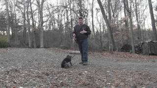 German Shorthaired Pointer Puppy Training | Winston Salem Nc