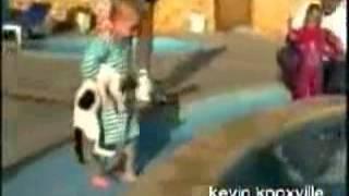 Кот и бассейн