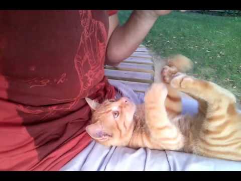 FIP (Feline Infectious Peritonitis) - Lotto the Cat