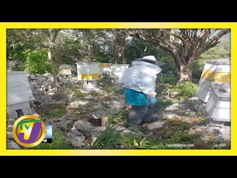 Beekeepers Satisfying Local Honey Demand in Jamaica | TVJ Business Day