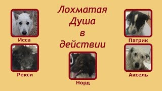 5 сбитых собак за 2 дня. Five downed dogs during 2 days.