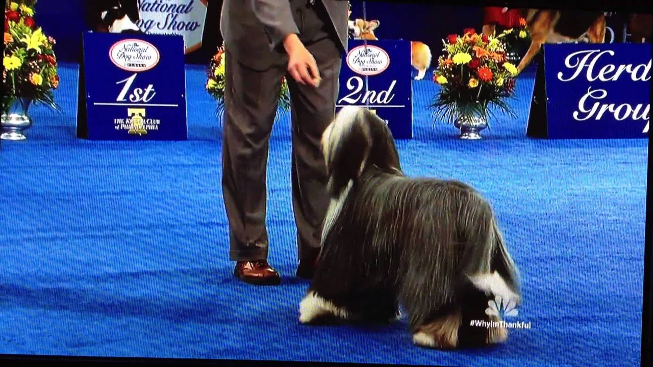 National Dog Show On Thanksgiving Day