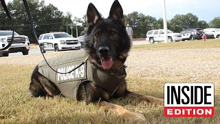 Download How a Bulletproof Vest Saved This Brave Police Dog's Life Mp3 and Videos