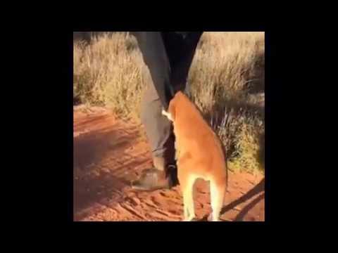Tayfun Yılmaz-Ayarsız Kanguru Amerikan Dublaj...