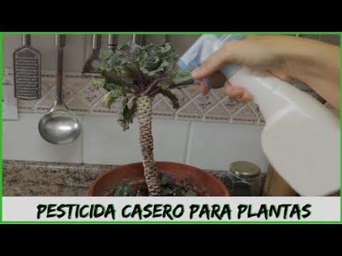 Pesticida Casero Para Plantas Pulgón Mosca Blanca Arañas Insecticida Youtube