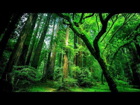 🎧6 Stunden Waldgeräusche mit Vögel zur Entspannung   Meditation