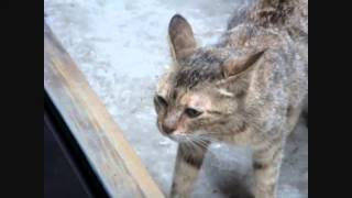 кошка защищает котят  Cat protects her kittens