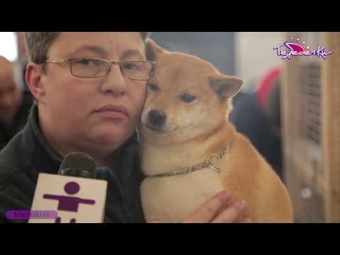 Какая собака похожа на медвежонка :: Породы собак
