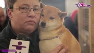 Фестиваль японских пород собак
