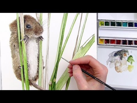 How to paint fur in watercolour