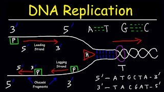 This biology video tutorial provides a basic introduction into dna replication. it discusses the difference between leading strand and lagging strand...