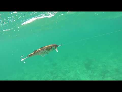 How Lures Swim: Live Target Mullet