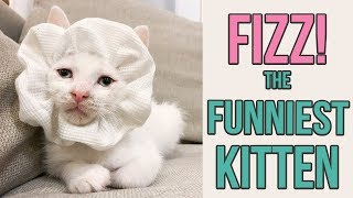 Try Not to Laugh at This Silly Kitten thumbnail