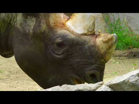 English subtitles일본 오사카여행 텐노지 동물원 japan osaka tennoji zoo