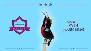 Master Dasyat Kolibri Ninja Bongkar Isian Full Tembakan