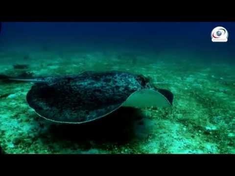 سفر - سيشيل /Safar - Seychelles