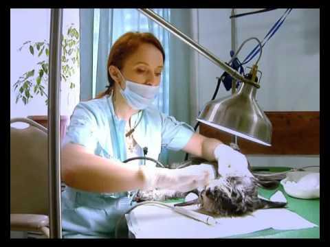 Домашний питомец (Выпуск 6) (Аппаратная чистка зубов у животных) (РИА Биробиджан)