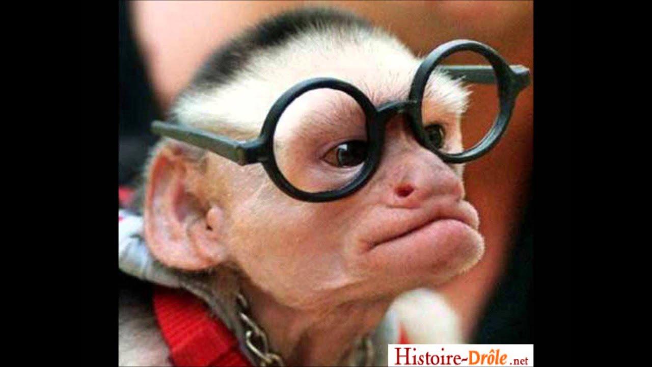 Singe qui parle avec des lunettes noires exclusif youtube - Petit singe rigolo ...