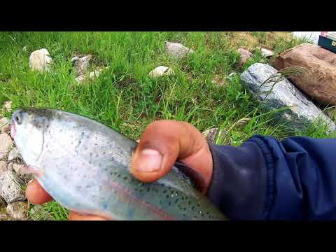 McQuillan Reservoir Fishing Using Variety Of Spoons For Stocked Trout ( You Never Get Skunked Here!)