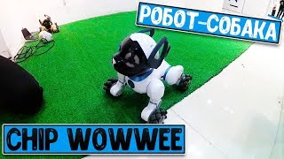 Робот-собака CHiP WowWee | Интерактивная выставка роботов в Бресте