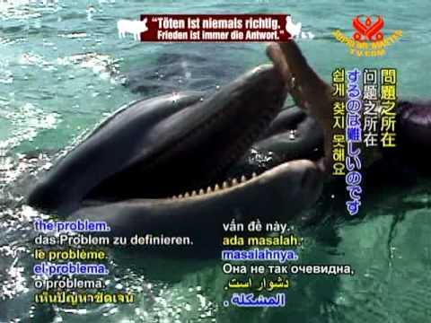 Should Marine Mammals Be in Captivity?