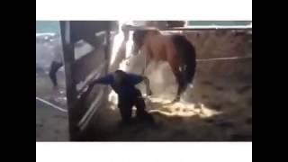 человек vs лошадь [vk tv]