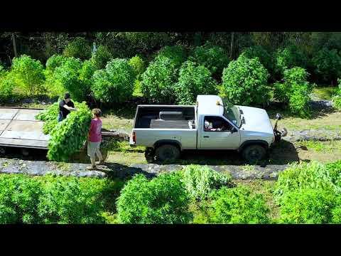 2019 High Falls Hemp Harvest Trailer