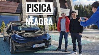 Alex și-a reparat Tesla lovită - Pisica Neagră
