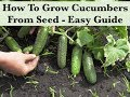 How To Grow Cucumbers From Seed Indoors - Starting Seeds
