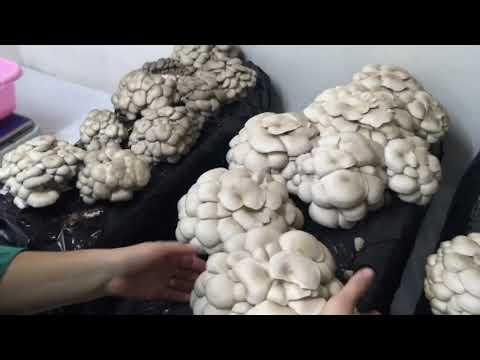 Выращивание грибов в домашних условиях: технология и