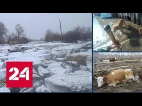 Более 400 приусадебных участков подтоплены паводком в Алтайском крае - Россия 24