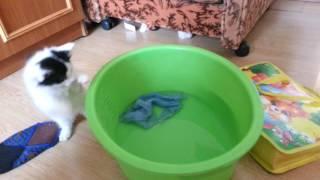 Любопытный котенок первый раз увидел воду.
