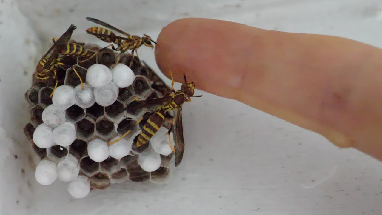 Download My Pet Wasps New Home