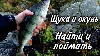 Спиннинг с берега Ловля щуки Ловля окуня Рыбалка на хищника осенью