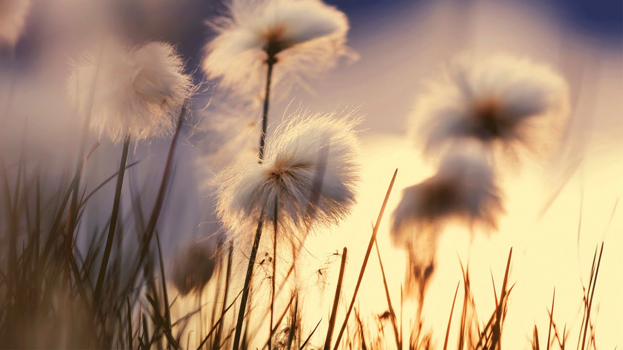 Free Hd Flower Wallpaper Morning Instrumental Relaxing Background Music Youtube