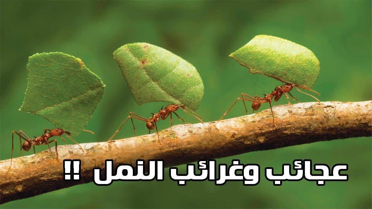 ما لا تعرفه عن النمل !!