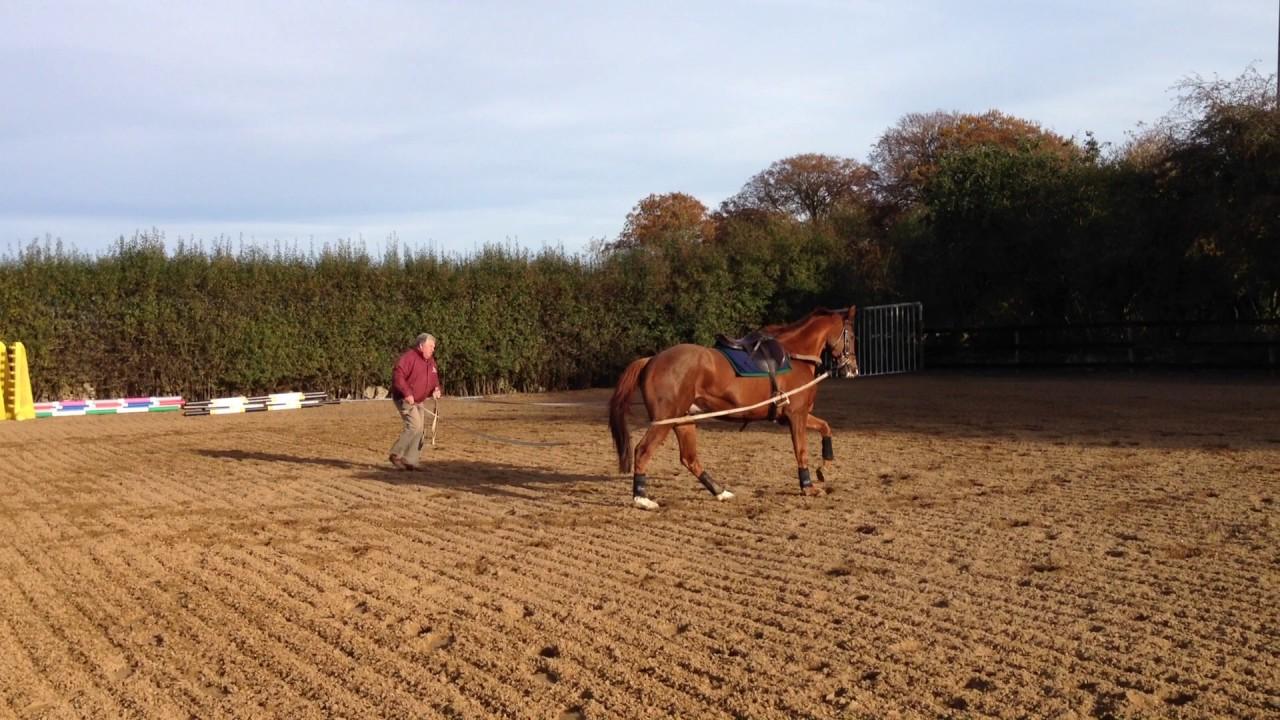 Ground Training for Horses