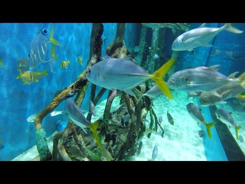 Guy Harvey RumFish Grill- Swim With The Fishes Experience