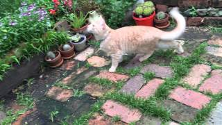 Cat chirps at bird