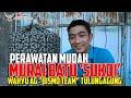 Perawatan Mudah Murai Batu Sukoi Wahyu Age  Bismo Team  Sjayz Cup   Mp3 - Mp4 Download