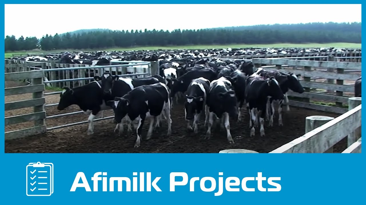Project report cow dairy