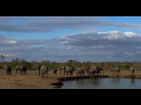WildEarth Live Sabi Sand/Kenya sunset 23-9 the crocs kills Thomson Gazelle Lions at Mara and Sabi Nk