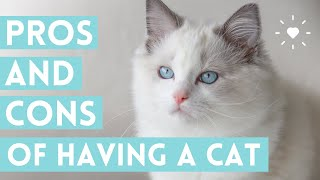 OWNING A CAT  (pros and cons of getting a cat that you NEED to know!)