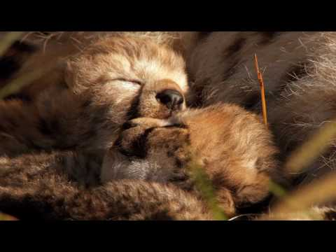 African Cats: Kingdom of Courage (2011) Trailer