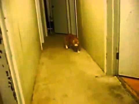 Кот паркурщик