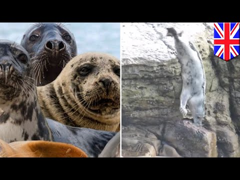 Remaja nakal lempar batu ke anjing laut, paksa mereka untuk menyelam - TomoNews