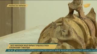 Маңғыстау облысында 100 млн жыл бұрын тіршілік еткен плезиозавр табылды