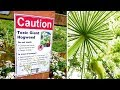 Virginia Is Being Invaded By Giant Plants That Causes 3rd Degree Burns And Blindness